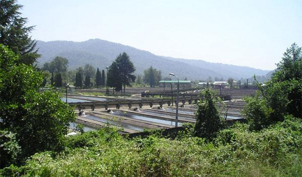 Промышленное выращивание рыбы: расчеты количества корма