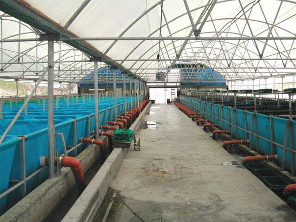 рыболовное хозяйство строит бассейн для разведения рыбы бассейн имеет форму