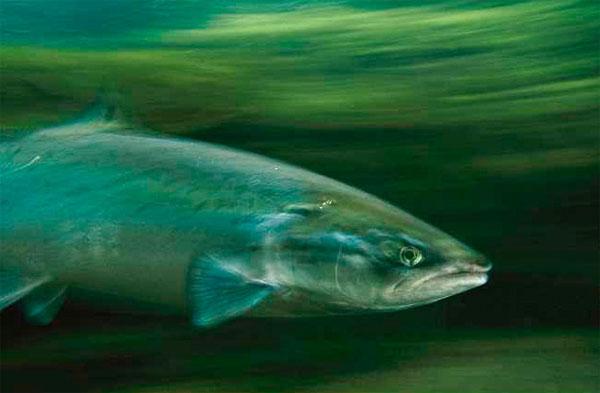рыбные паразиты опасные для человека фото