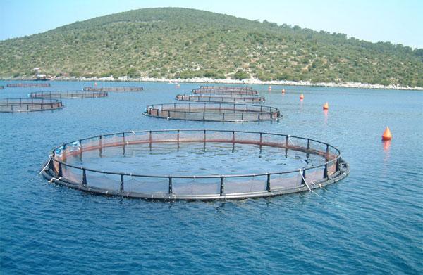 Вопросы коррекции федерального закона об аквакультуре обсудили на Сахалине
