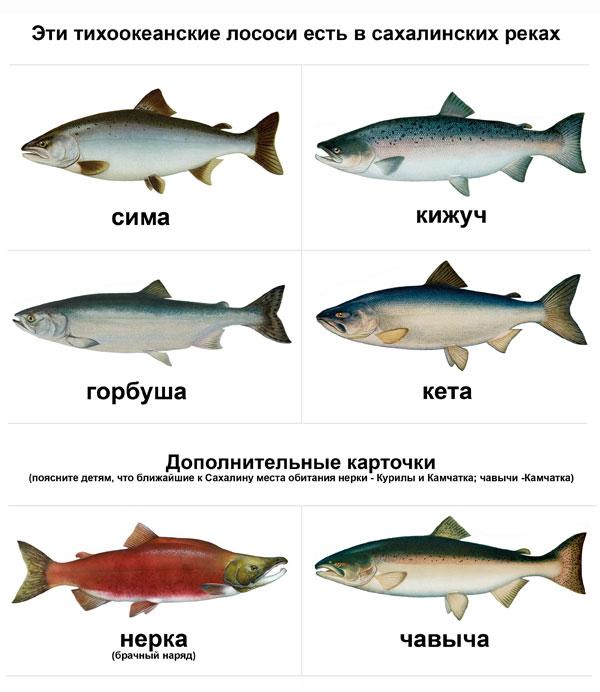 с чем сочетается рыба здоровое питание