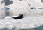 antarktida(123).jpg