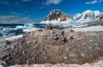 antarktida(142).jpg