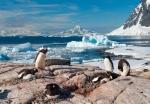 antarktida(146).jpg