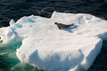 antarktida(160).jpg