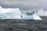 antarktida(24).jpg