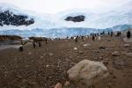antarktida(62).jpg