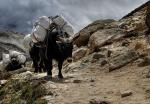 nepal(5).jpg