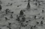 ostrov-tulenei(58).jpg
