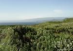 poluostrov-kriljon(4).jpg