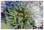 priroda-sahalina(33).jpg